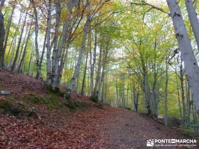 Hayedo de Tejera Negra [Serie Clásica];gredos senderismo excursiones a pie
